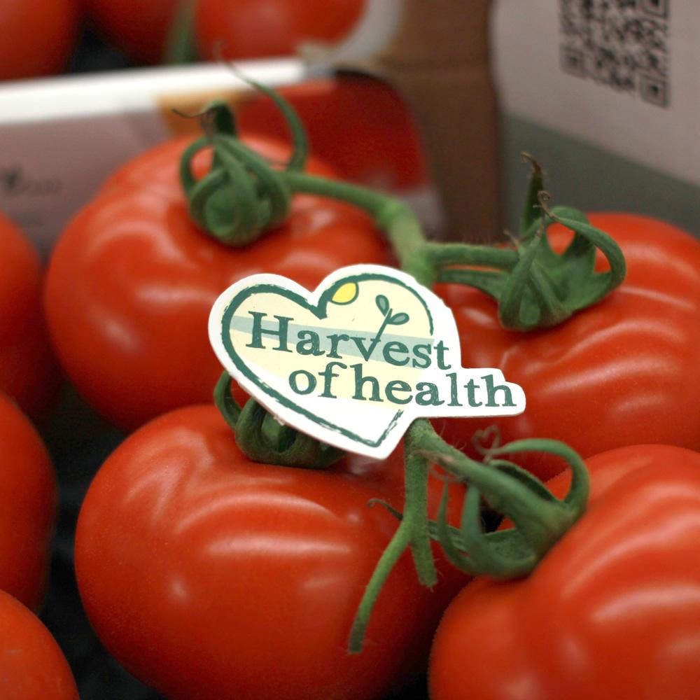Harvest of Health Tomaten